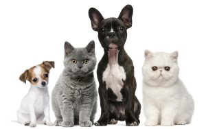 bigstock-Group-of-dogs-and-cats-in-fron-15953471